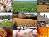 Produção de alimentos e até de celular pode reduzir reservas de água, alerta ONG