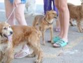 Brasileiro gasta, em média, R$189 por mês com animais de estimação