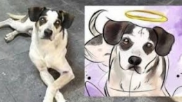 Após morte de cão, Carrefour terá de depositar R$ 1 milhão em fundo