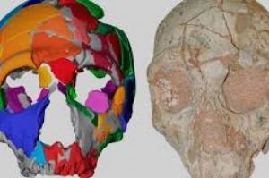 Dois crânios ameaçam mudar a história da nossa espécie