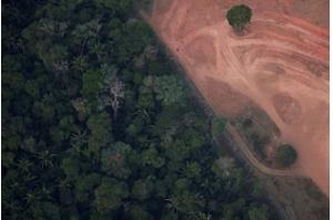 Diante da pressão mundial, Bolsonaro enviará Forças Armadas contra as chamas na Amazônia