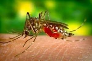 Pesquisa: vírus Zika traz prejuízos motores e de memória a adultos