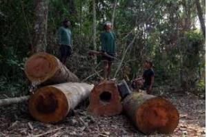 Assassinatos, ameaças e milícias: desmatamento na Amazônia é crime em larga escala