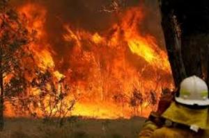 Inundação, fogo e praga: mudança climática é considerada culpada por desastres pelo mundo