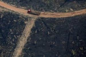 Desmatamento começa mais cedo na Amazônia e dobra em janeiro na comparação anual