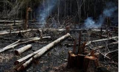 Os incêndios na Amazônia desatam críticas mundiais ao Governo Bolsonaro