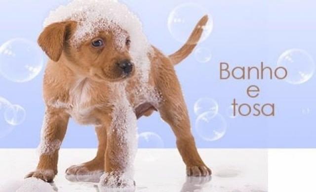 Banho + Tosa + Tosa Higienica + Limpeza de Ouvido + Corte de Unha + Escovação de Dente De R$ 100,00 por R$ 60,00