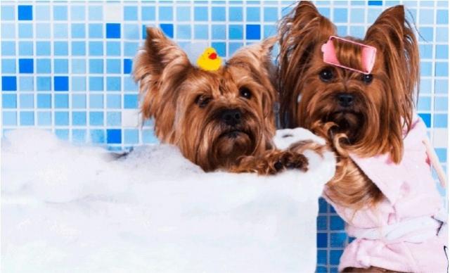 Banho + Tosa + Tosa Higiênica + Corte de Unha + Limpeza de Ouvido + Hidratação De R$ 80,00 por R$ 49,60